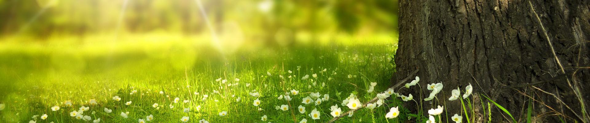 Bewässerung & Garten